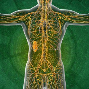 Sistema linfático - Linfedema