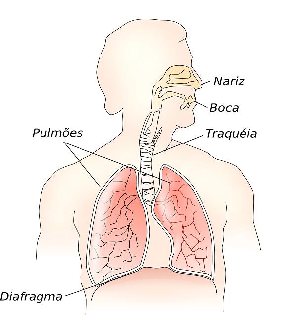Aparato respiratorio que se mejorará con la fisioterapia