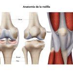 Lesiones del menisco de la rodilla. Características y tratamiento